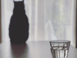 猫と一杯の水
