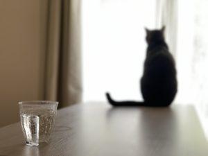 猫 窓の外