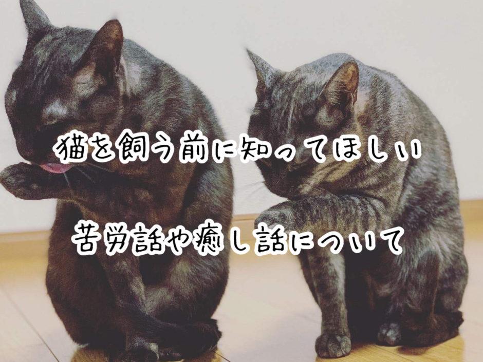 猫を飼う前に知ってほしい苦労話や癒し話について