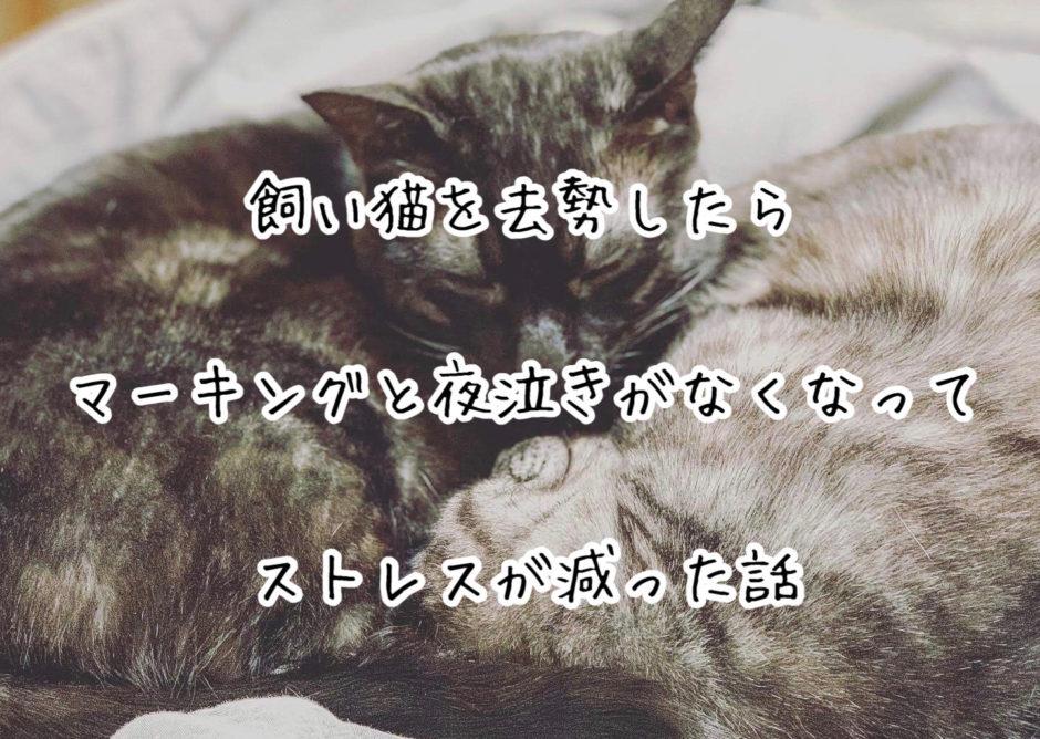 飼い猫を去勢したらマーキングと夜泣きがなくなってストレスが減った話