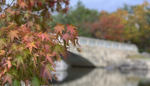 新潟県立鳥屋野潟公園|鐘木エリアで紅葉が楽しめる!公園の見所や雰囲気を紹介します