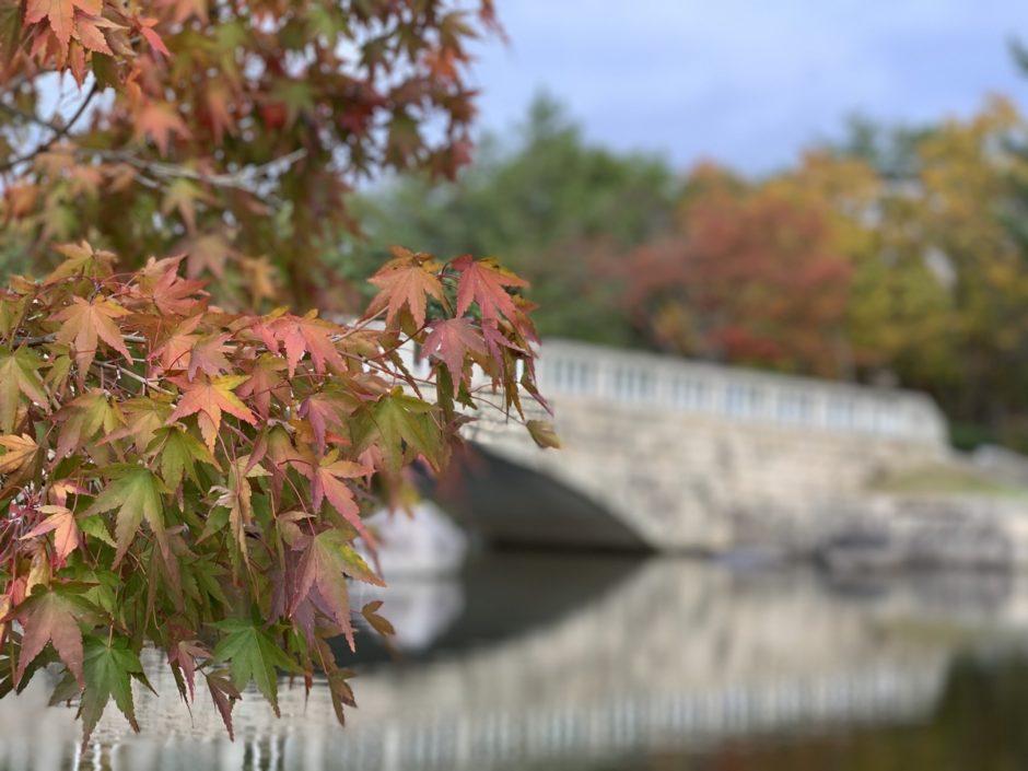 新潟県立鳥屋野潟公園|鐘木地区で紅葉が楽しめる!公園の見所や雰囲気を紹介します