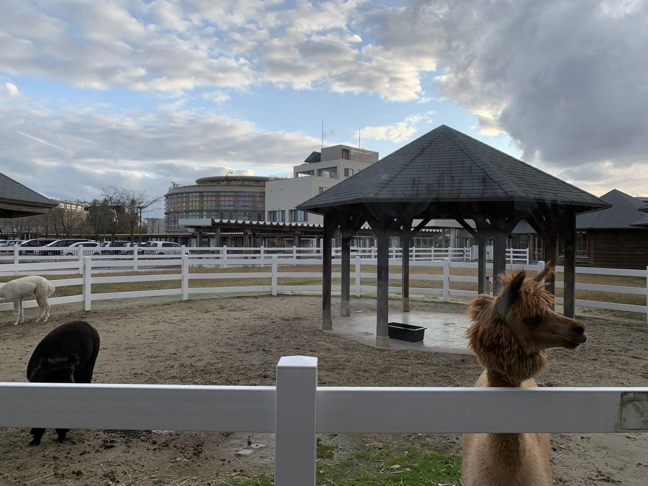 動物ふれあいセンターでふれあい体験をしてみた!