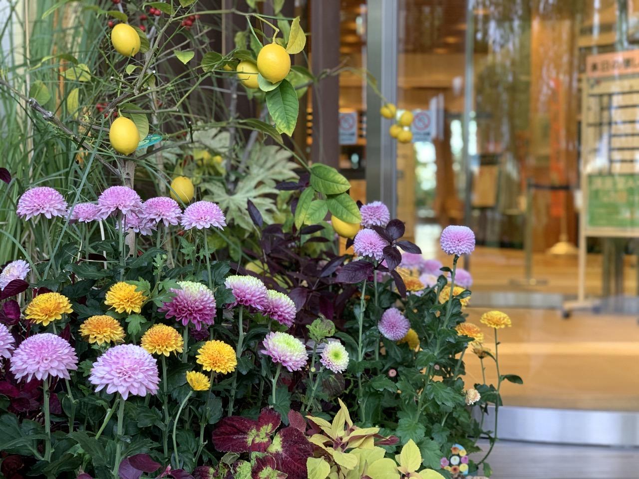 いくとぴあ食花|食育・花育センターの雰囲気について