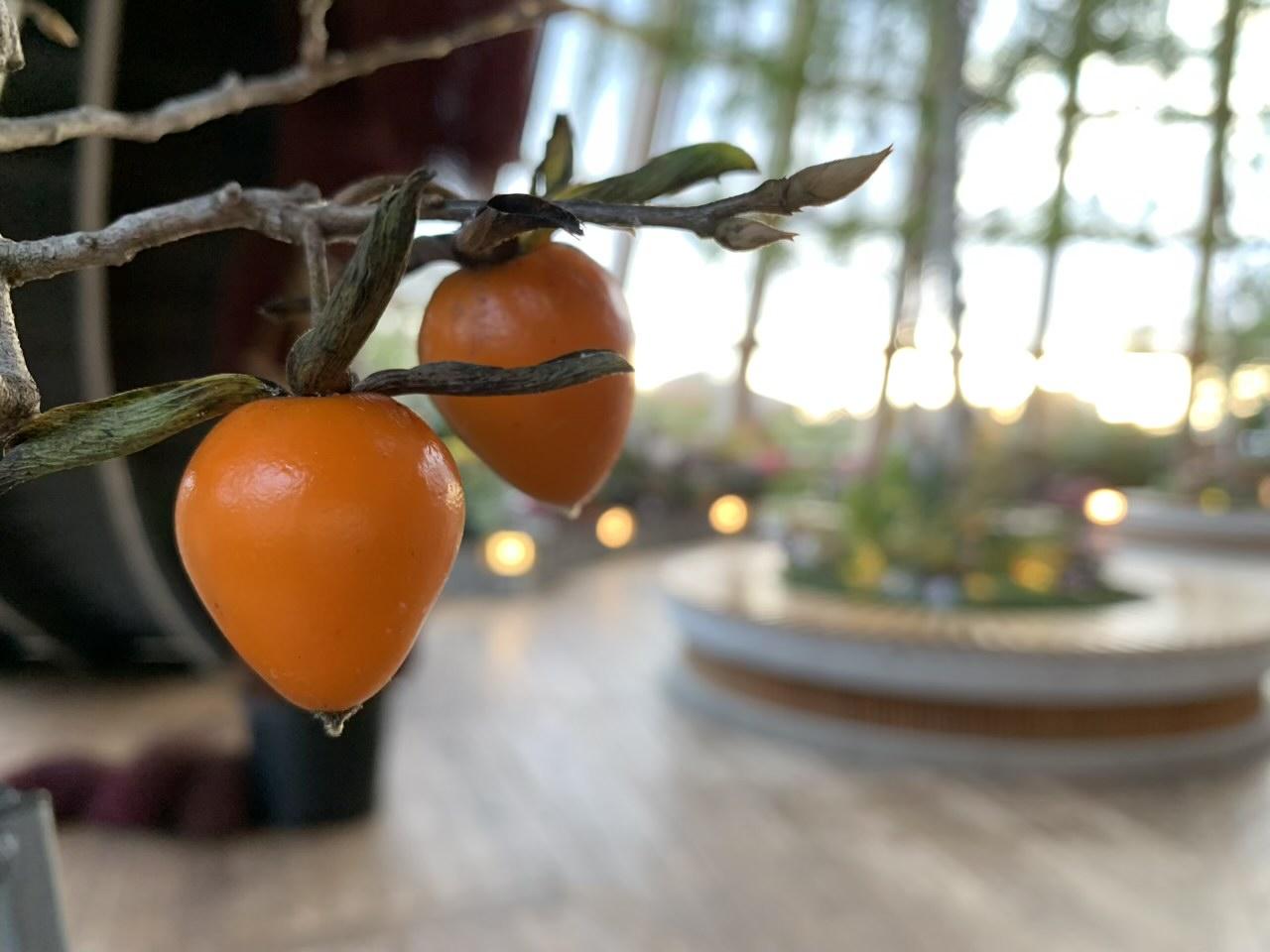 食育・花育センター「アトリウム」は緑あふれる癒し空間に!